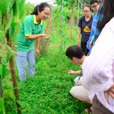 A field trip to organic farm with USTH EcoClub